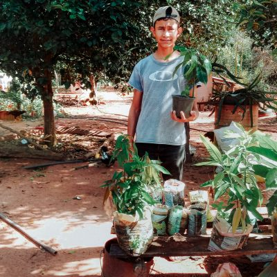 Como plantar mudas em casa (2)