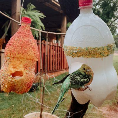 Preservação Animal - construção de comedouros para pássaros com material reciclável (2)
