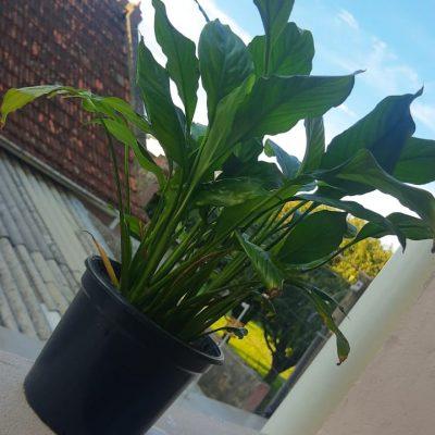 TURMA AL29 - espalhando amor e plantas (2)