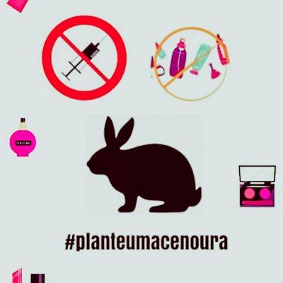 #planteumacenoura (3)
